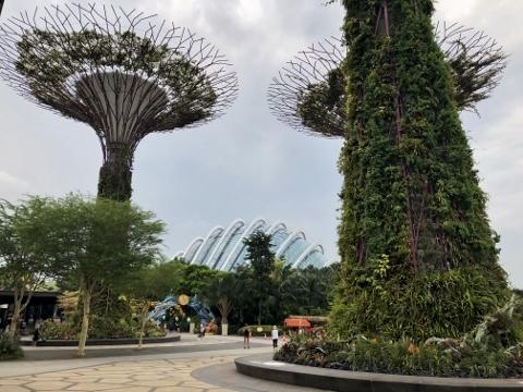 シンガポール植物園1