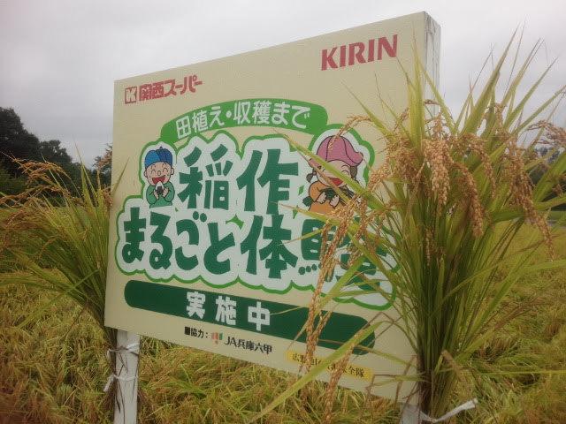 2018稲刈り01