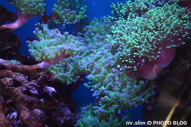 DSC_7612_サンゴ