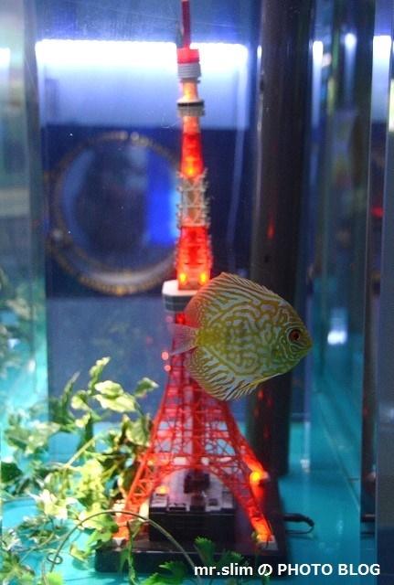 DSC_7858__ディスカス&東京タワー