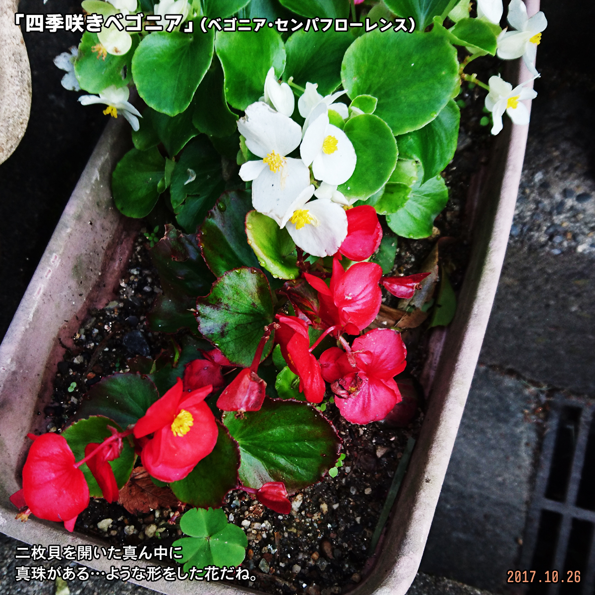 DSC_4674.jpg