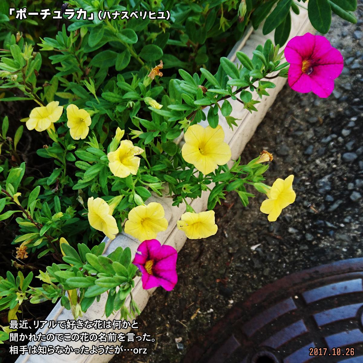 DSC_4686.jpg