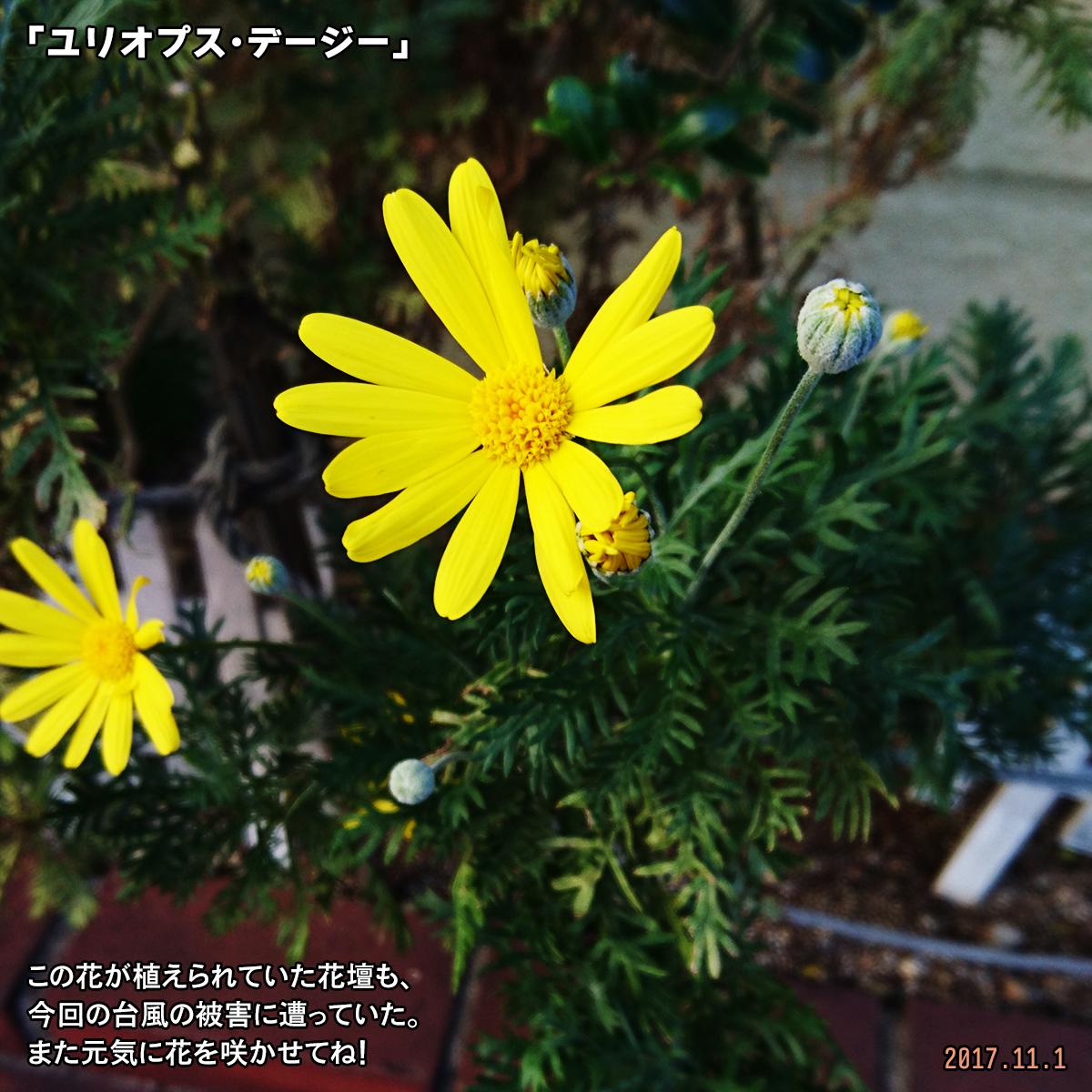 DSC_4764.jpg