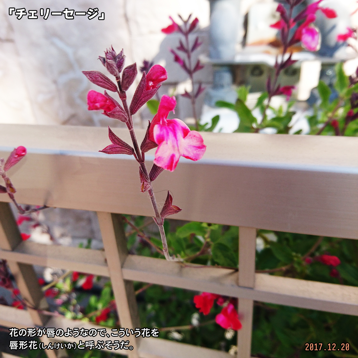 DSC_5288.jpg
