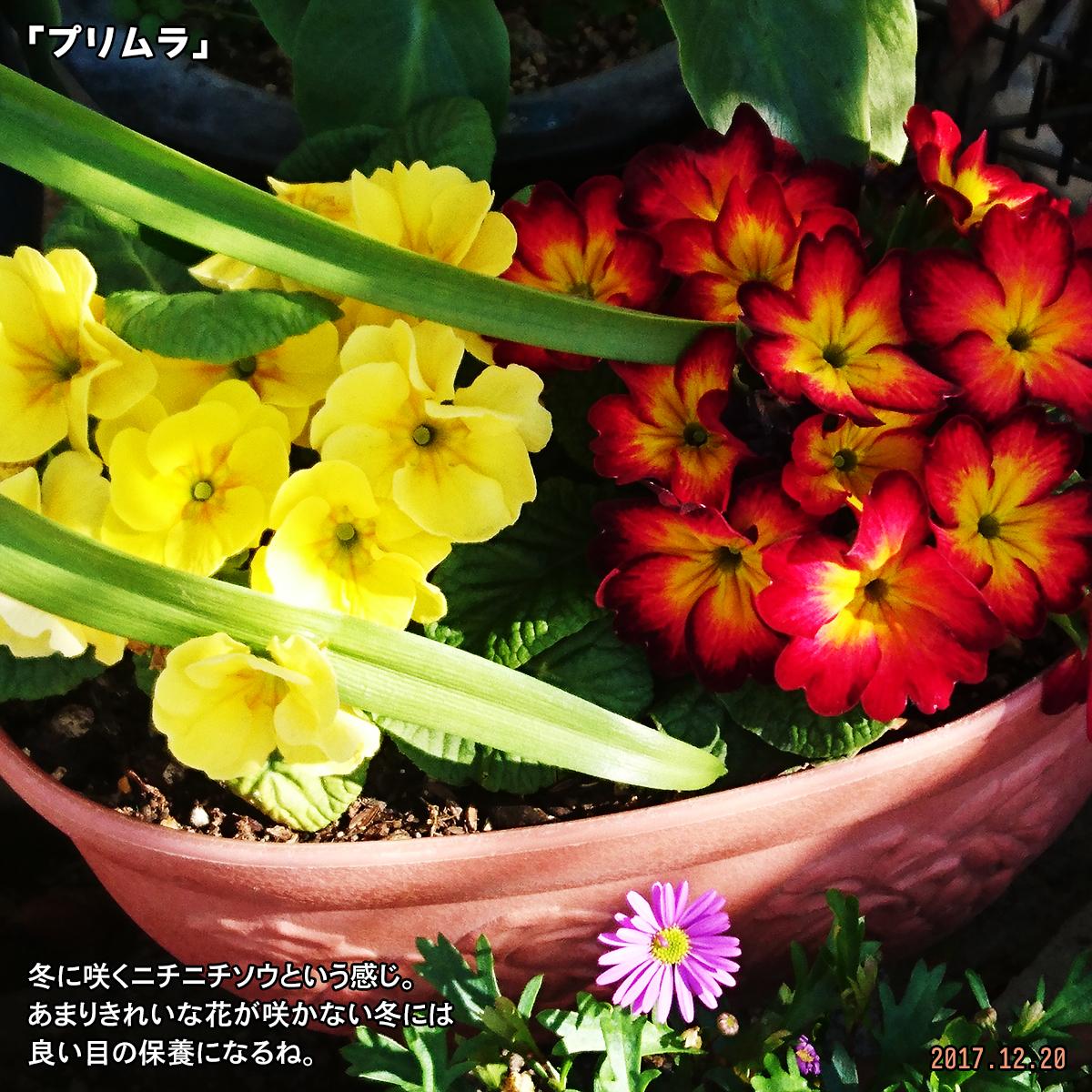 DSC_5297.jpg