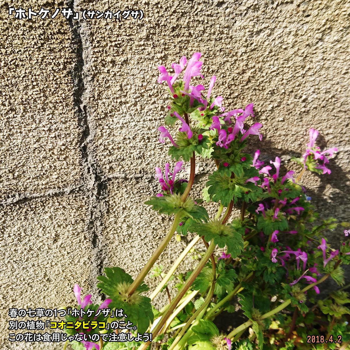DSC_6735_20180812201630693.jpg