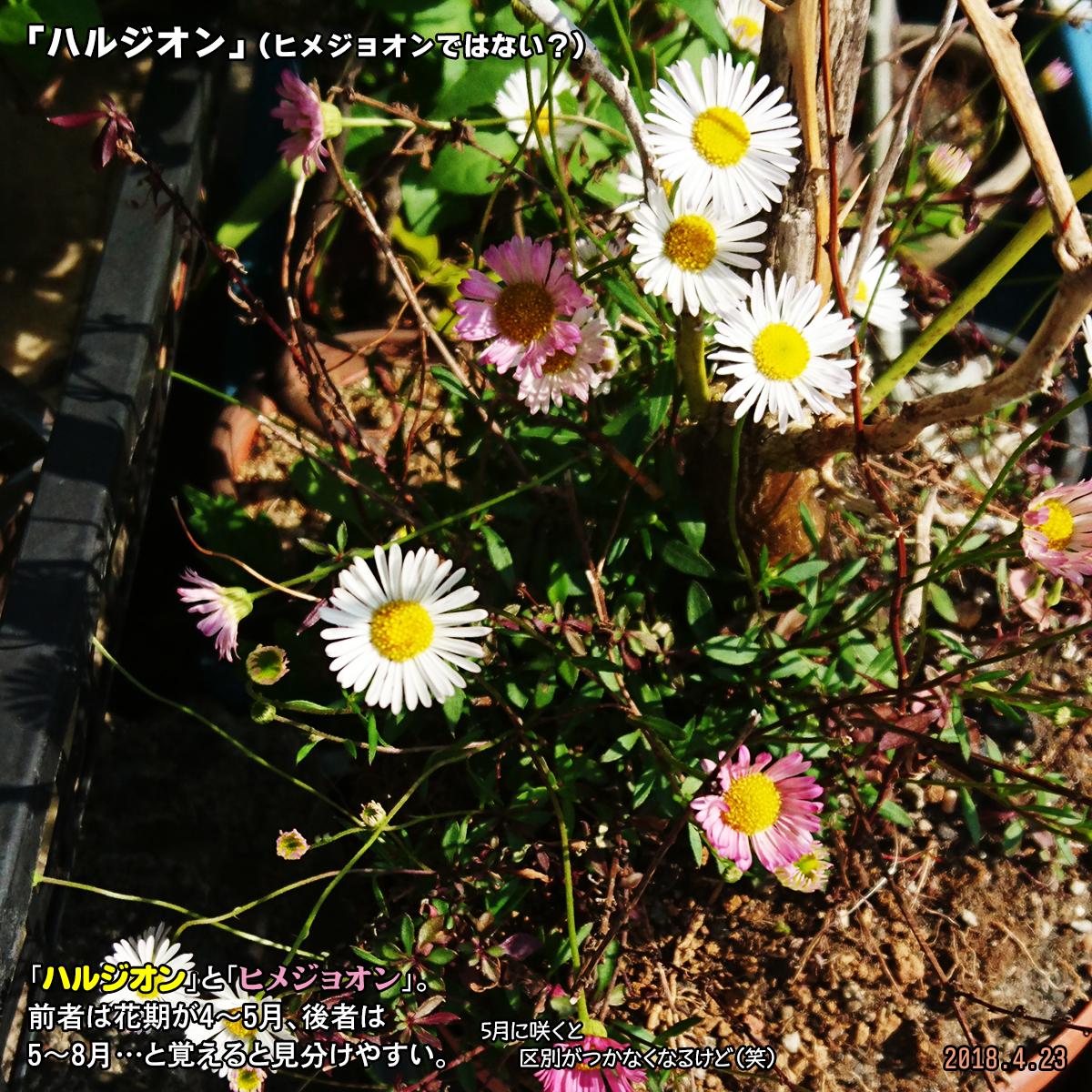 DSC_7115.jpg