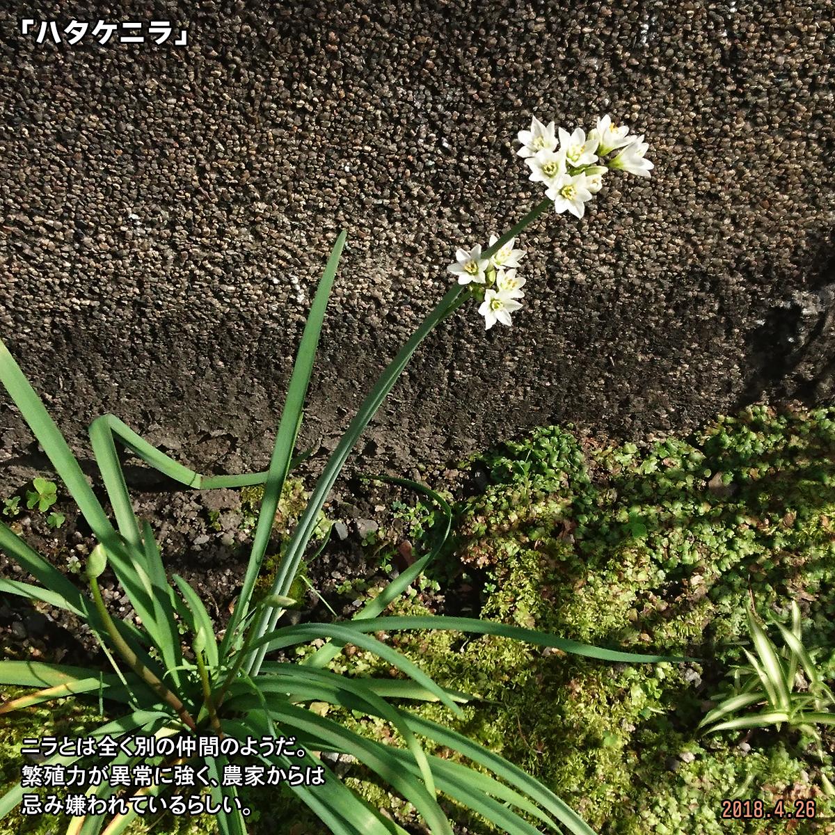 DSC_7160.jpg