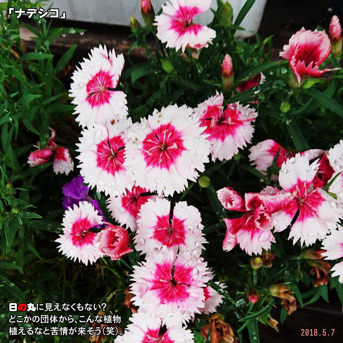 DSC_7240_2018091715461746c.jpg