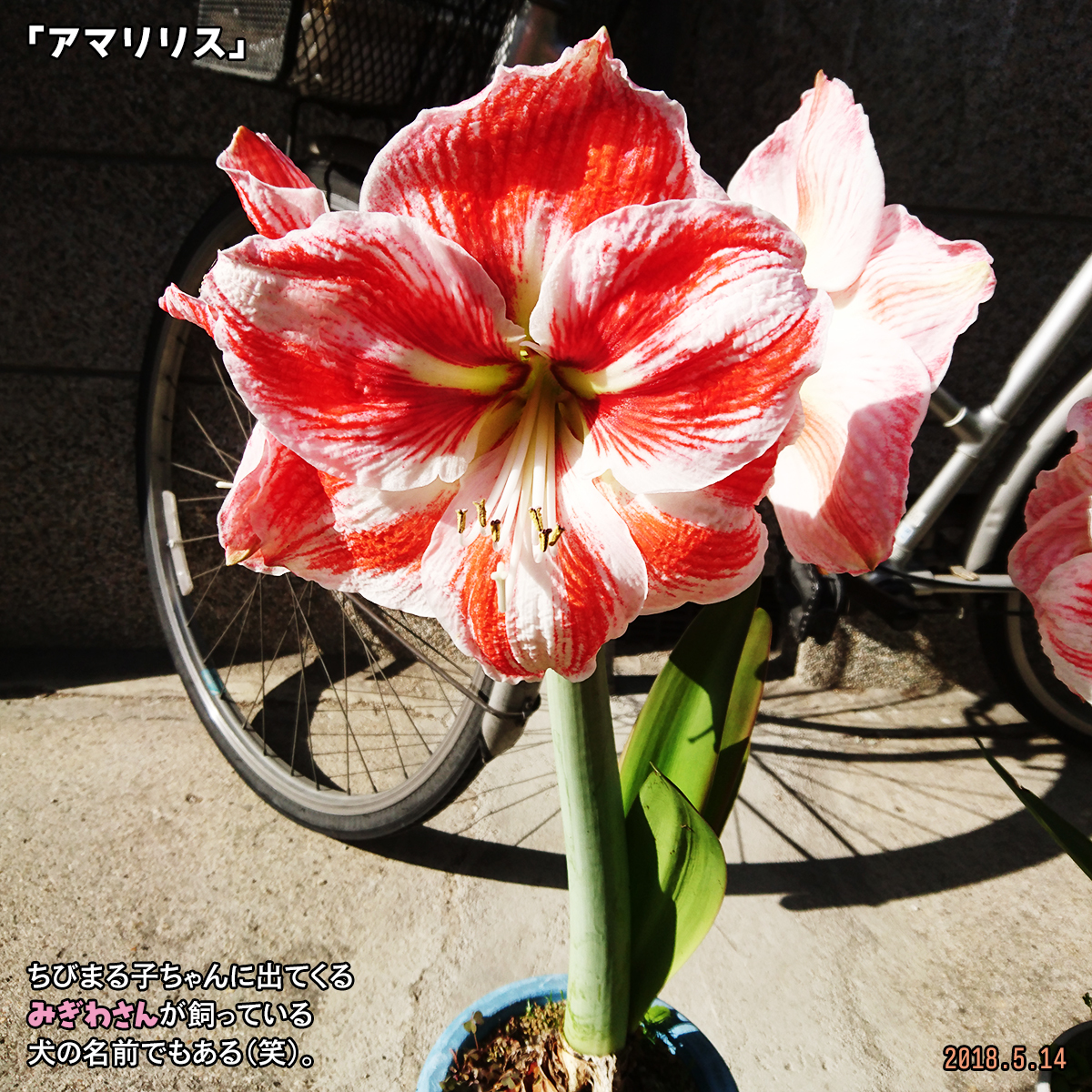 DSC_7304-1.jpg