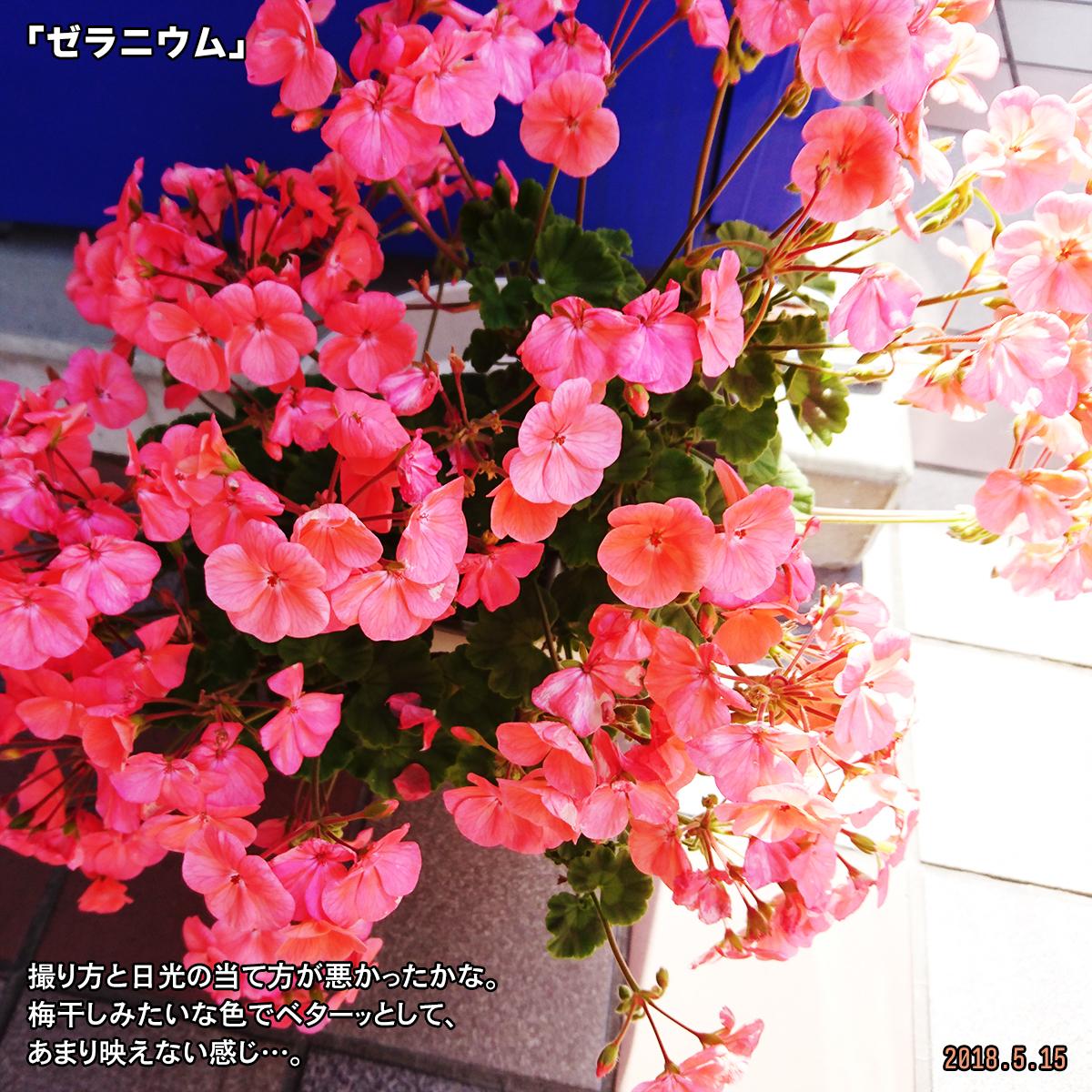 DSC_7344-2.jpg