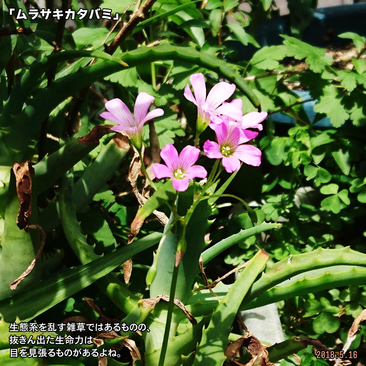 DSC_7349-1.jpg