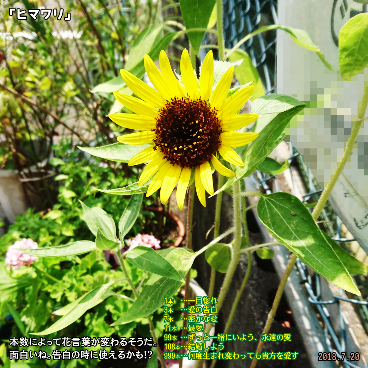 DSC_7807_20180907170028536.jpg