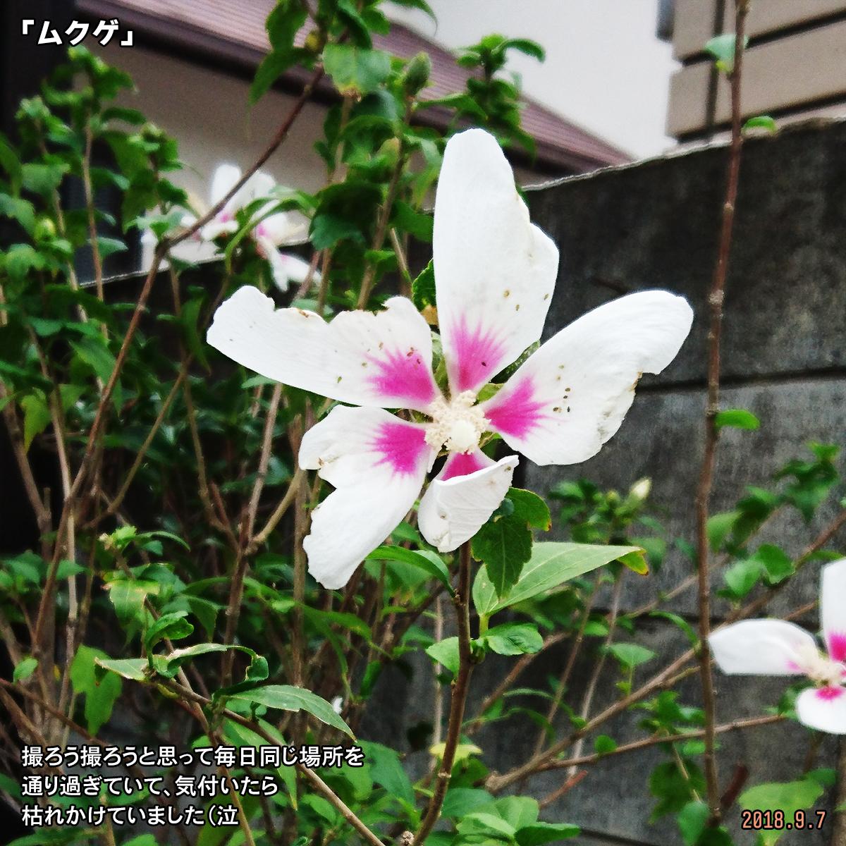 DSC_8131.jpg