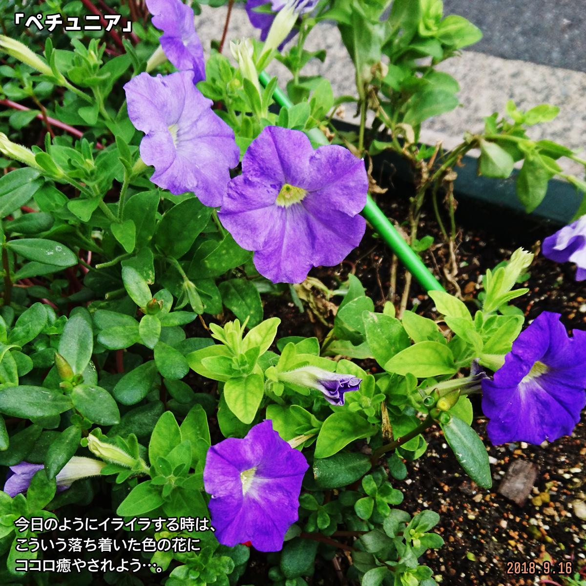 DSC_8205.jpg