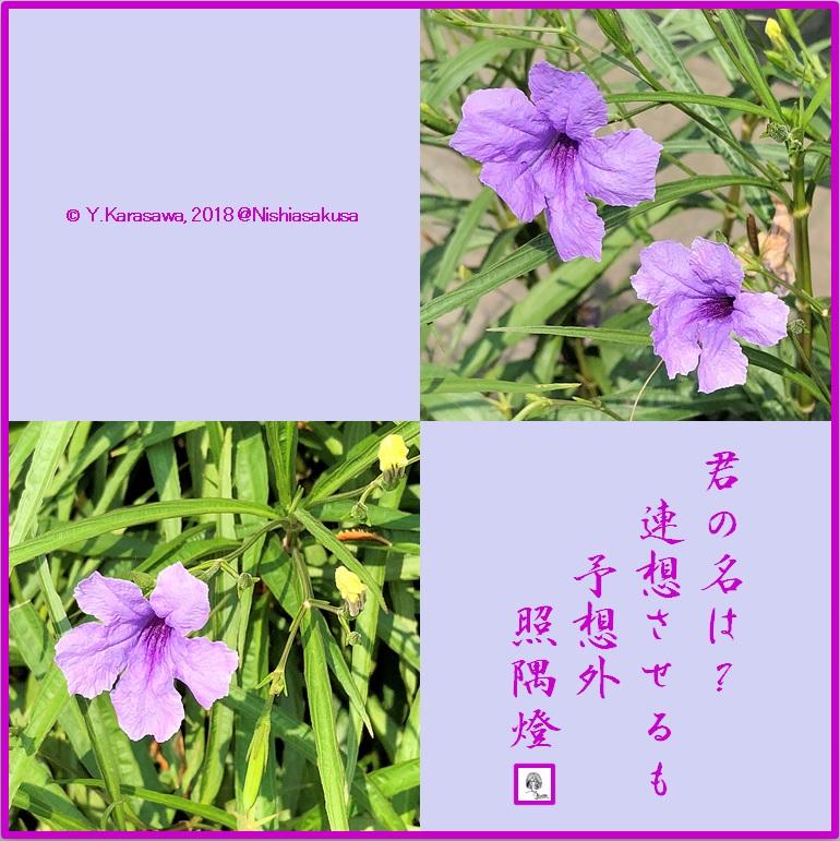 180815柳葉ルイラ草LRG