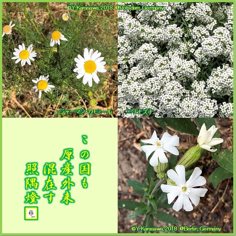 180819白い花LRG