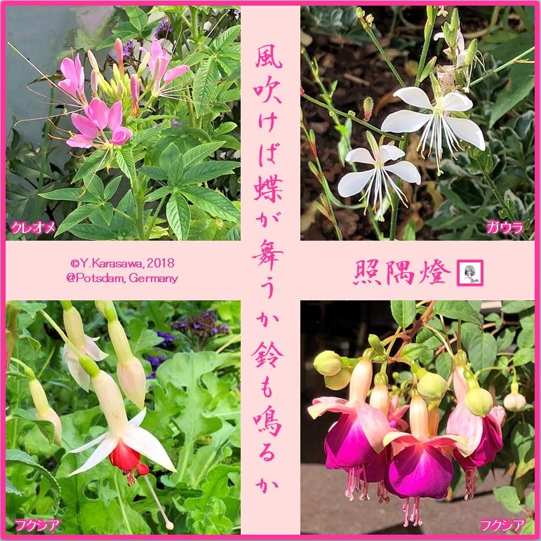 180820鈴や蝶形の花LRG