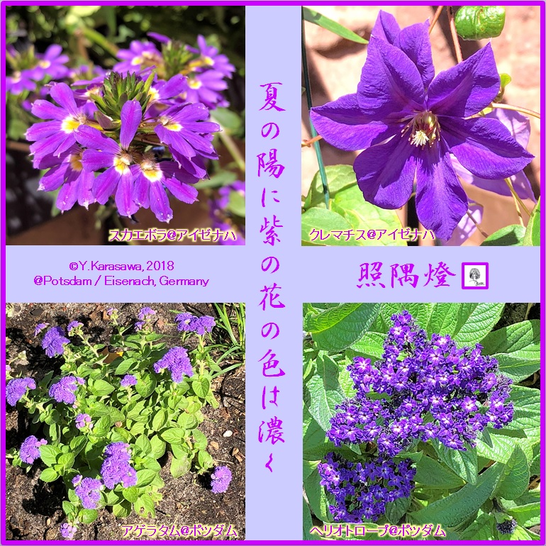 180826紫の花LRG