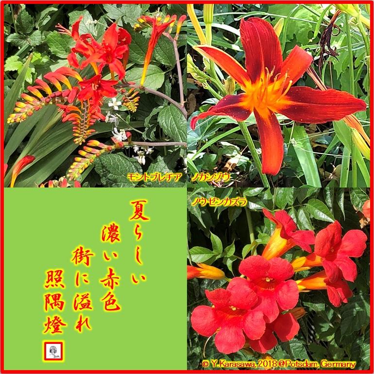 180827赤い花LRG