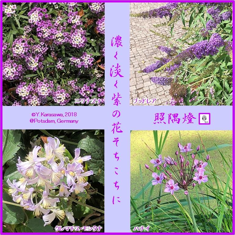 180830薄紫の花々LRG