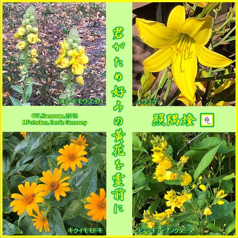 180831黄色い花々LRG
