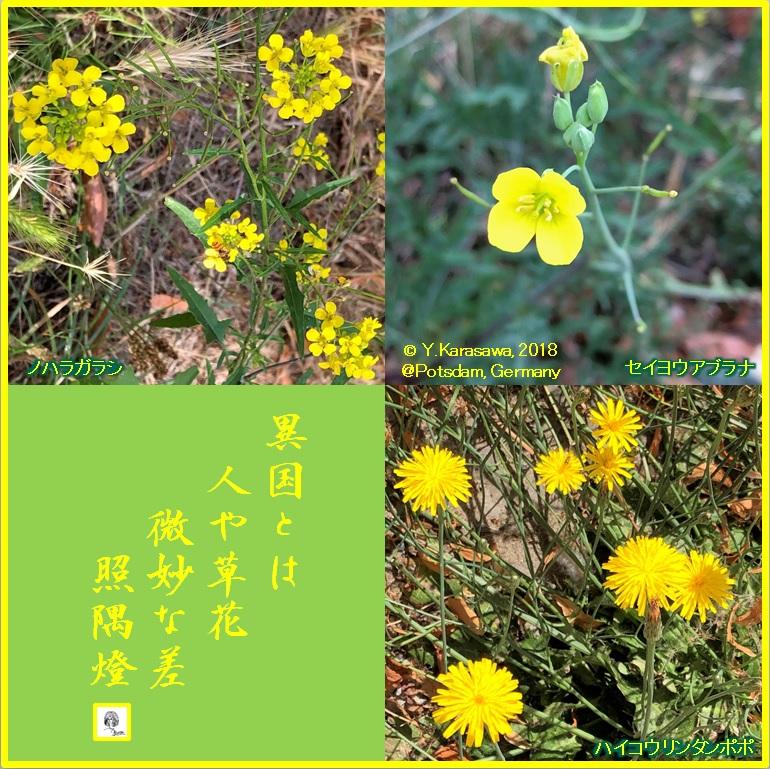 180905黄色い野草LRG
