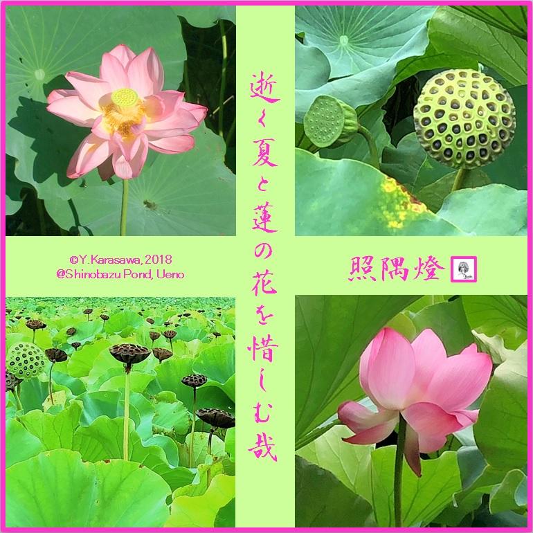 180908ハスの花LRG