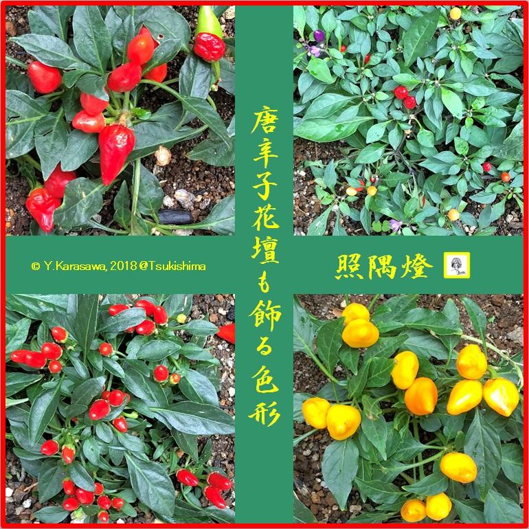 180917唐辛子LRG