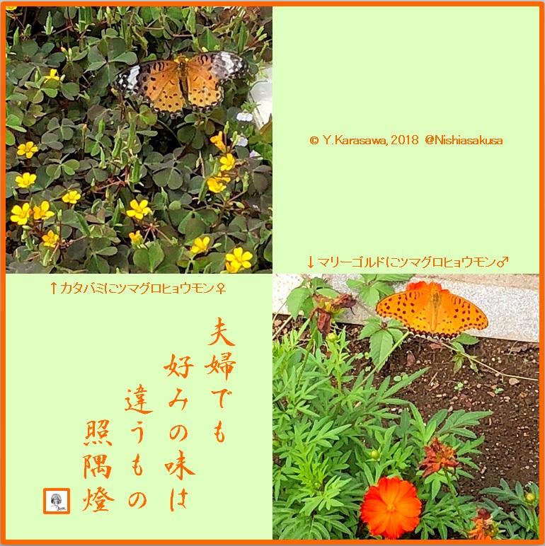 180927褄黒豹紋LRG