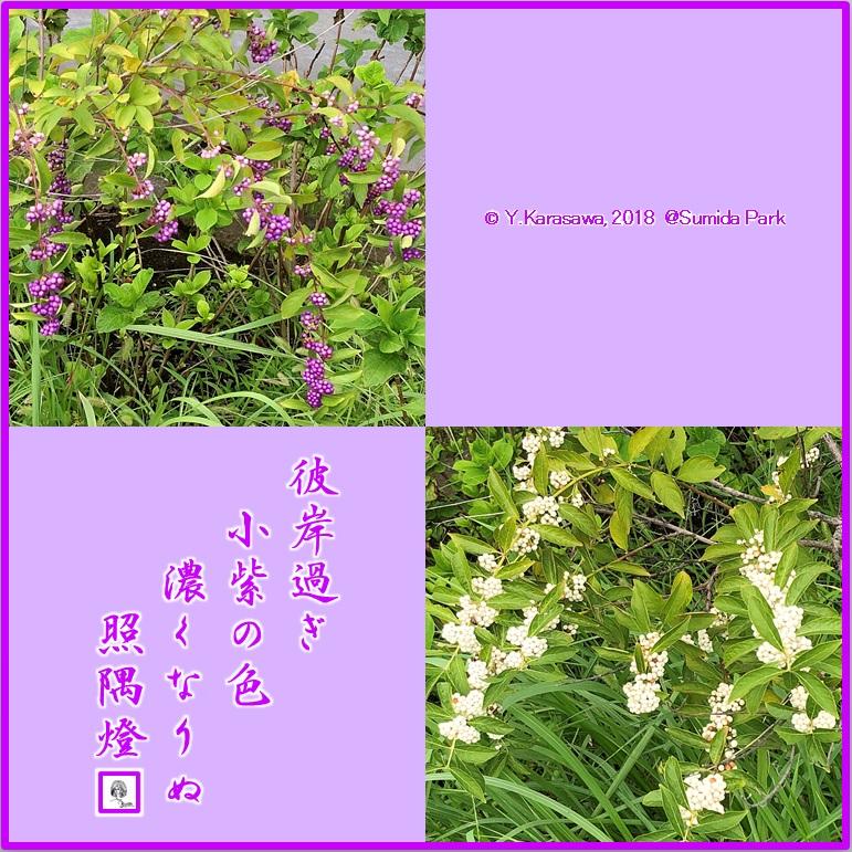 180928小紫LRG