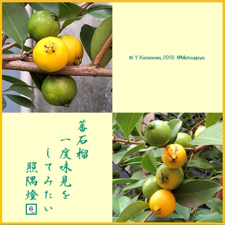 181006黄実の蕃石榴LRG
