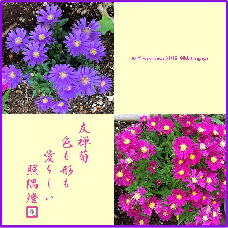181010友禅菊LRG