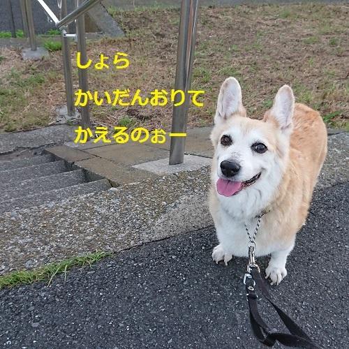 DSC_0381[1]