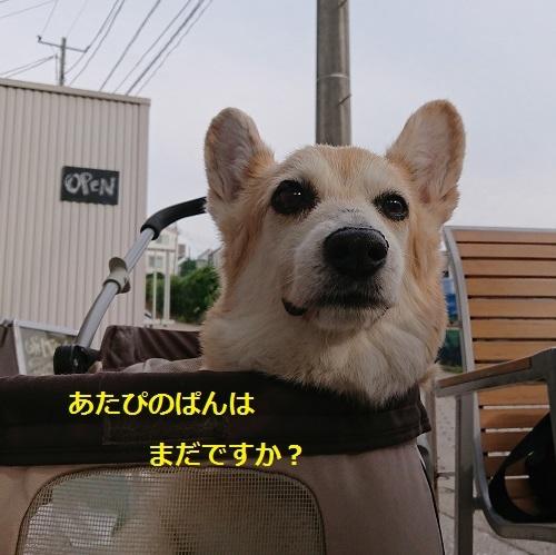 DSC_1330[1]
