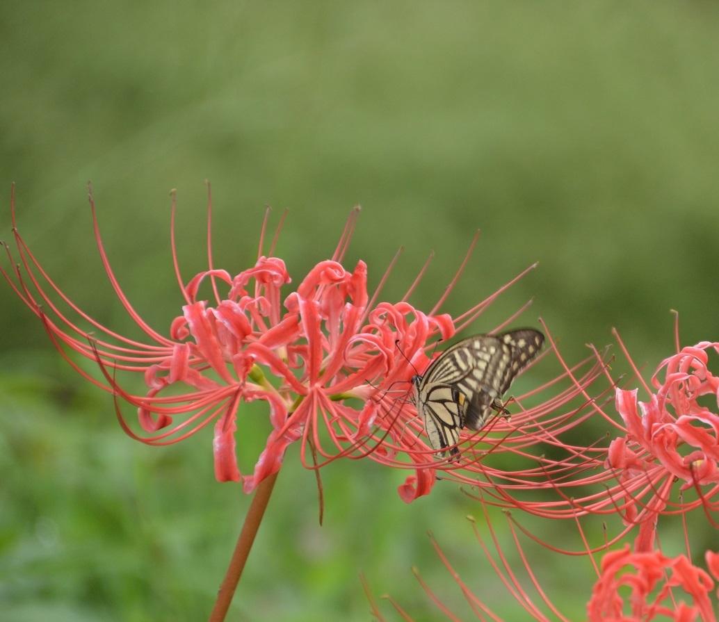 DSC_0388蝶とまる