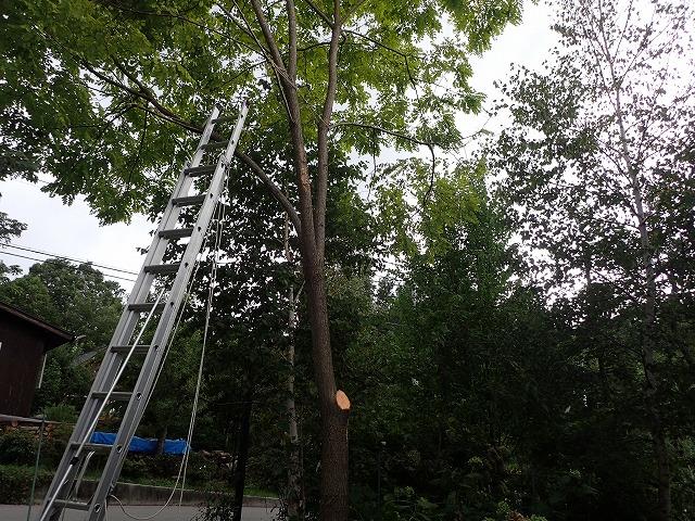 ポプラの枝とは
