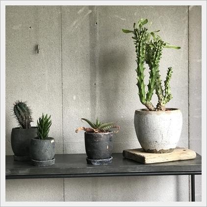 大人のオトコの鉄と植物