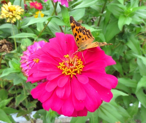 IMG_2163花と蝶