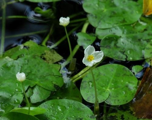 194白い花