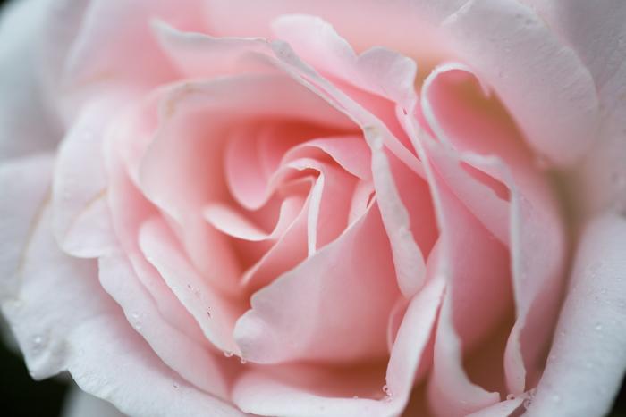 rosey20181006-1546.jpg