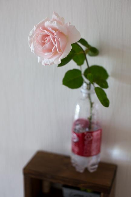 rosey20181006-1598-2.jpg
