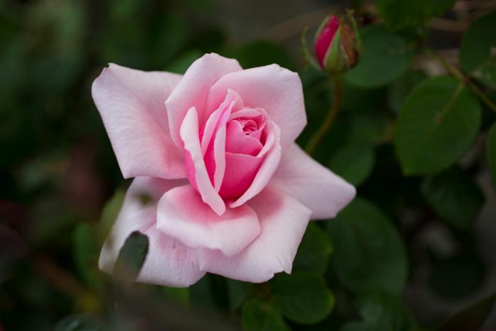 rosey20181006-1614.jpg