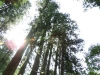出羽三山神社への杉並木
