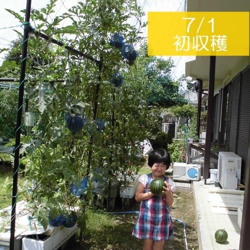 CIMG7094-k.jpg