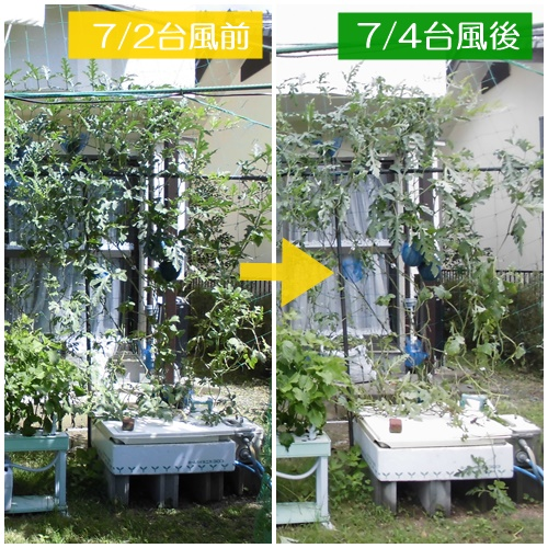 CIMG7218-k.jpg
