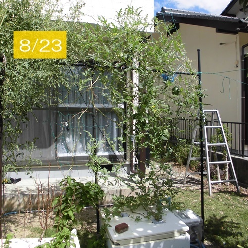 CIMG8131-K.jpg