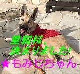 IMG_0619 - コピー - コピー