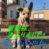 IMG_0608 - コピー - コピー