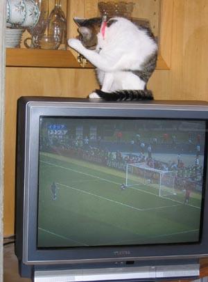 ワ-ルドカップ優勝